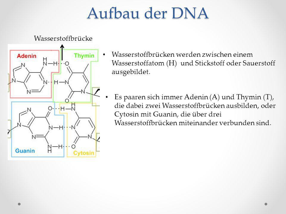 Aufbau der DNA Wasserstoffbrücke