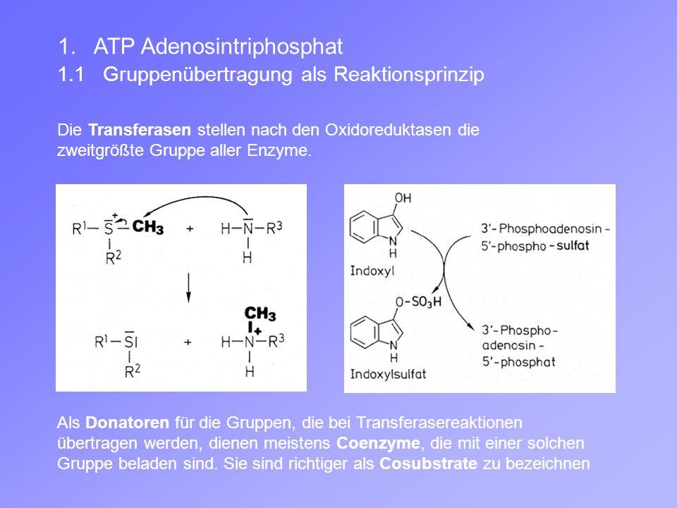 1. ATP Adenosintriphosphat