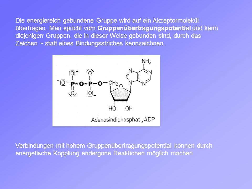 Die energiereich gebundene Gruppe wird auf ein Akzeptormolekül übertragen. Man spricht vom Gruppenübertragungspotential und kann diejenigen Gruppen, die in dieser Weise gebunden sind, durch das Zeichen ~ statt eines Bindungsstriches kennzeichnen.