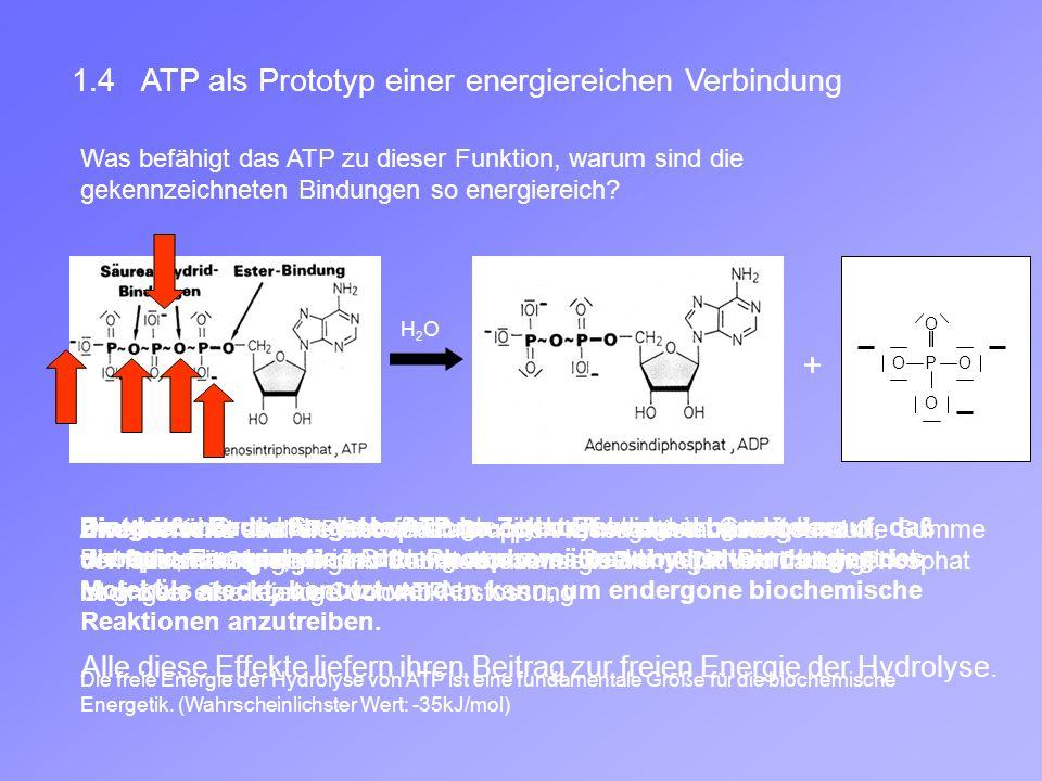 + 1.4 ATP als Prototyp einer energiereichen Verbindung