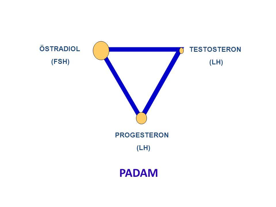 ÖSTRADIOL (FSH) TESTOSTERON (LH) PROGESTERON (LH) PADAM