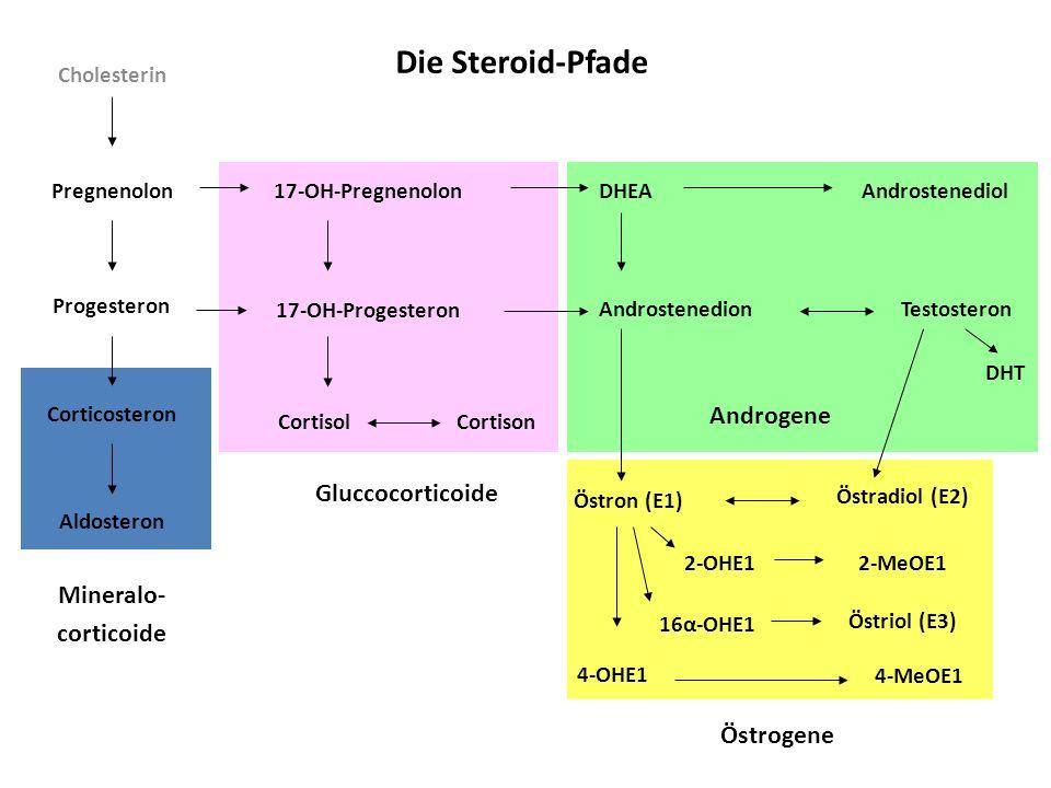 Die Steroid-Pfade Androgene Gluccocorticoide Mineralo- corticoide