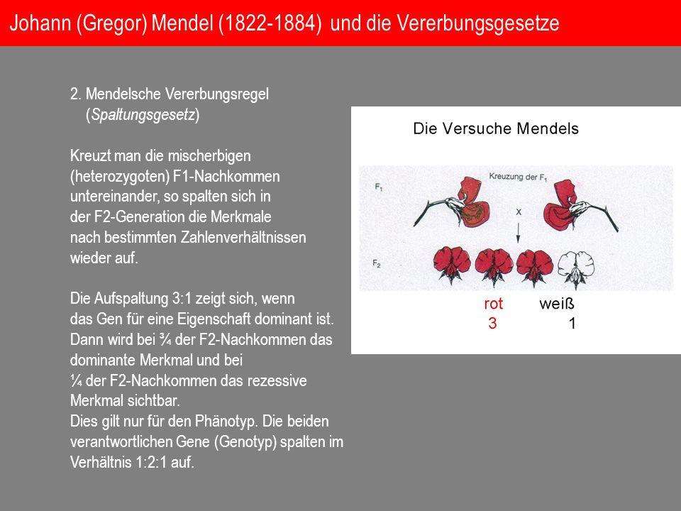 Johann (Gregor) Mendel (1822-1884) und die Vererbungsgesetze