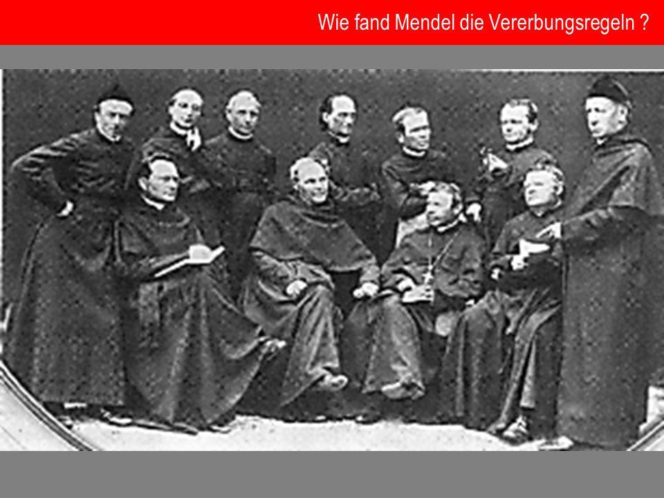 Wie fand Mendel die Vererbungsregeln