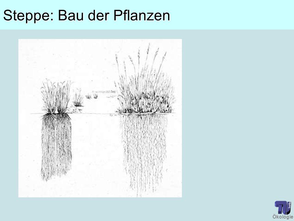 Steppe: Bau der Pflanzen