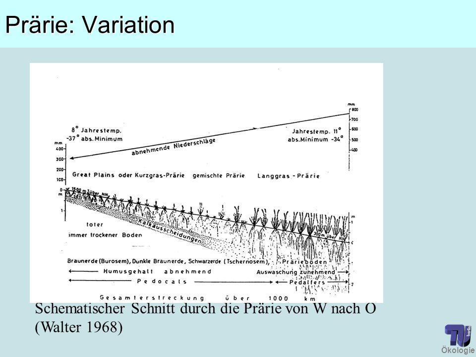 Prärie: Variation Schematischer Schnitt durch die Prärie von W nach O (Walter 1968)