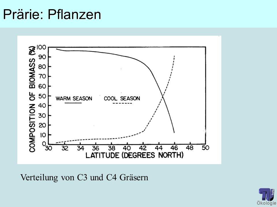 Prärie: Pflanzen Verteilung von C3 und C4 Gräsern