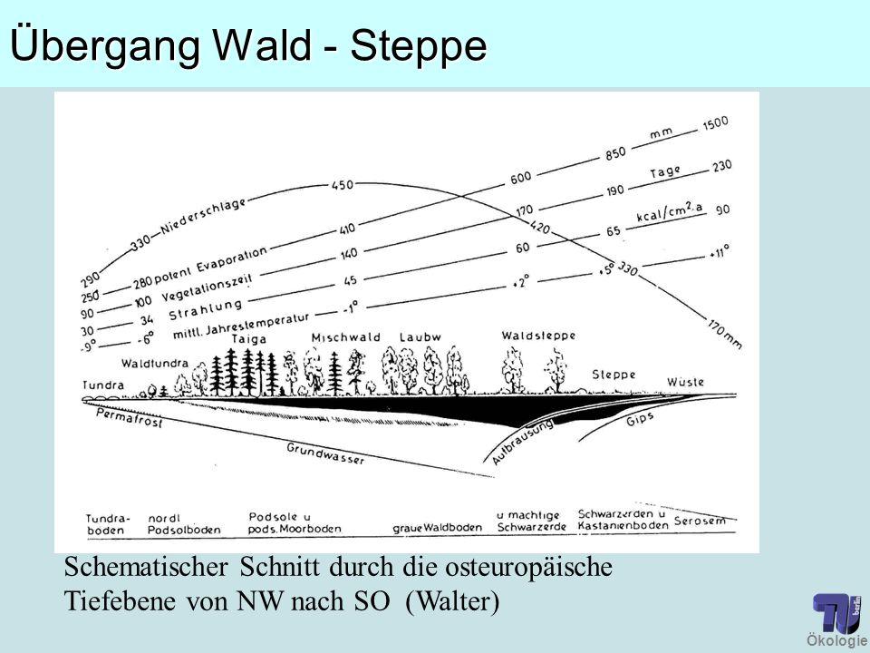 Übergang Wald - Steppe Schematischer Schnitt durch die osteuropäische Tiefebene von NW nach SO (Walter)