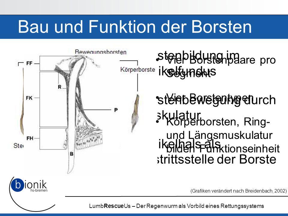 Bau und Funktion der Borsten