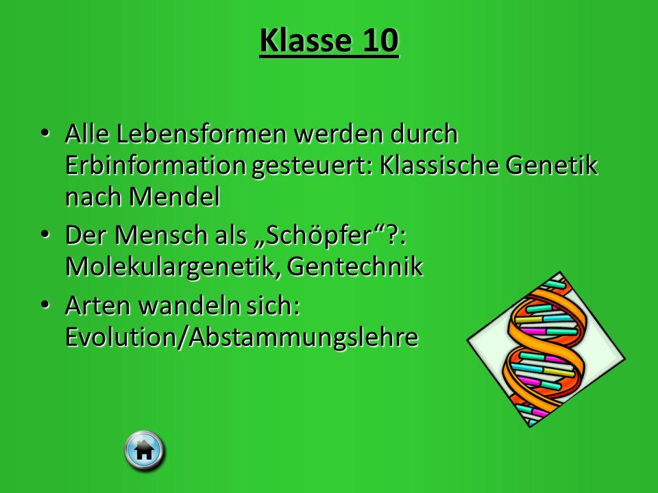 Klasse 10 Alle Lebensformen werden durch Erbinformation gesteuert: Klassische Genetik nach Mendel.