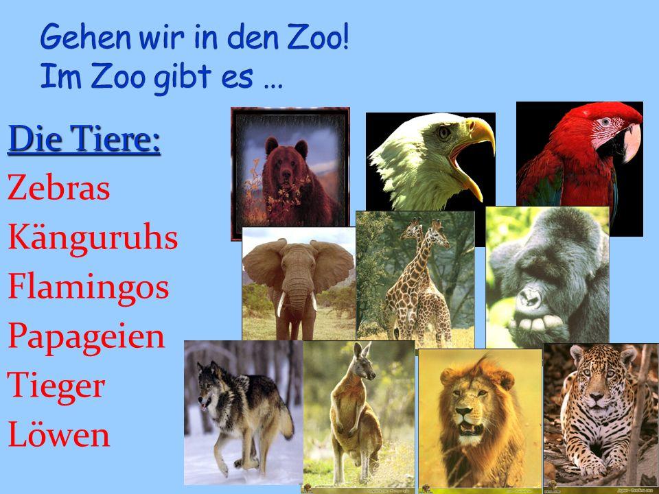 Gehen wir in den Zoo! Im Zoo gibt es …