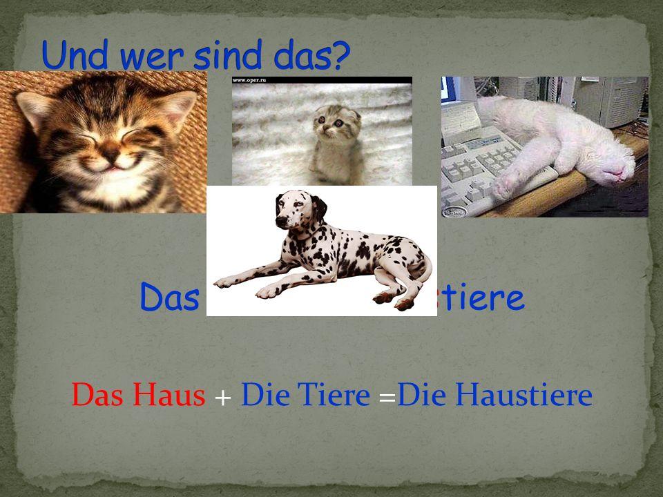 Das Haus + Die Tiere =Die Haustiere