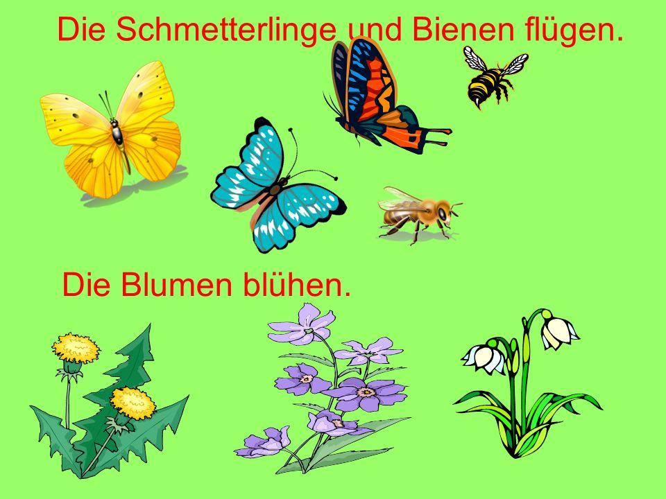 Die Schmetterlinge und Bienen flügen.