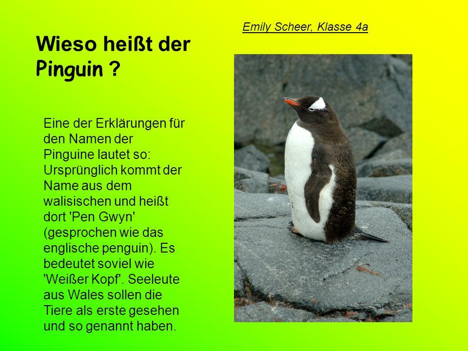 Wieso heißt der Pinguin