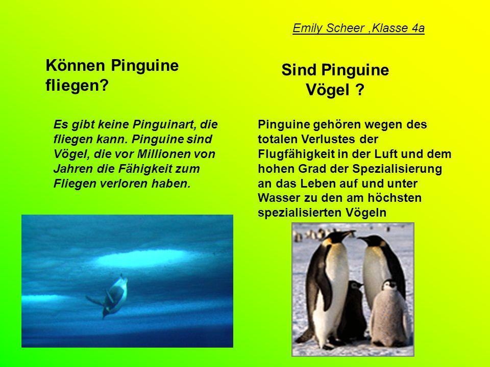 Können Pinguine fliegen Sind Pinguine Vögel