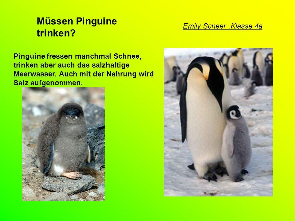 Müssen Pinguine trinken