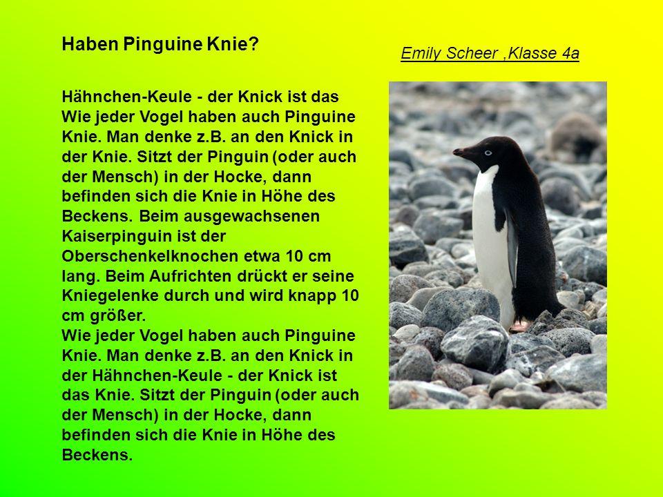 Haben Pinguine Knie Emily Scheer ,Klasse 4a