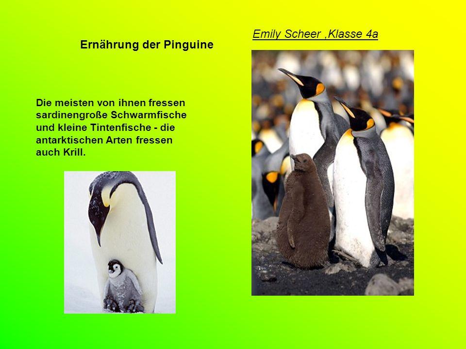 Ernährung der Pinguine