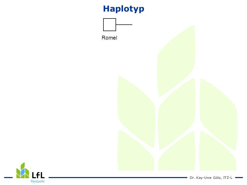 Haplotyp Romel