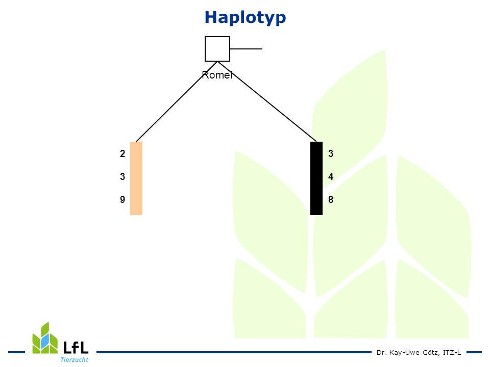 Haplotyp Romel 2 3 9 3 4 8