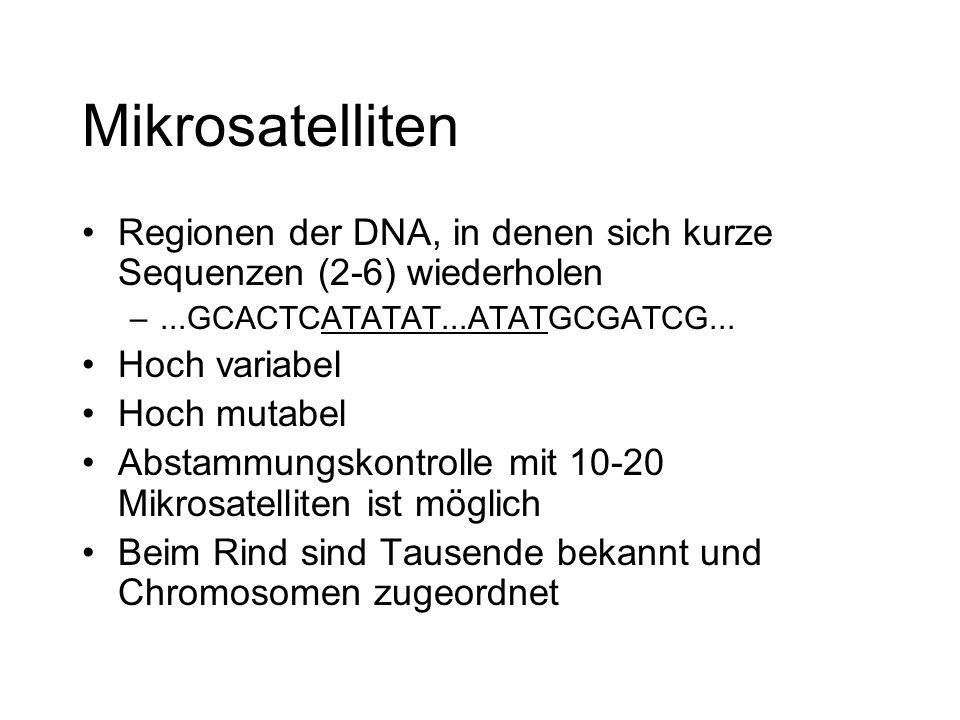 Mikrosatelliten Regionen der DNA, in denen sich kurze Sequenzen (2-6) wiederholen. ...GCACTCATATAT...ATATGCGATCG...