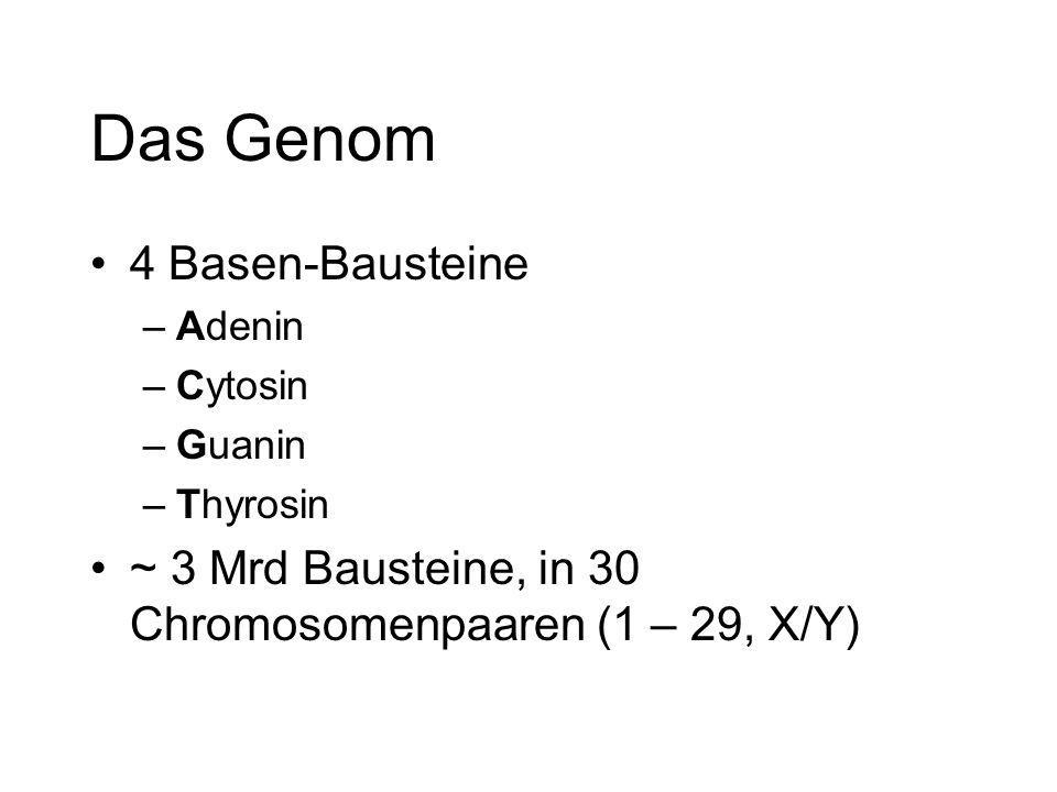 Das Genom 4 Basen-Bausteine