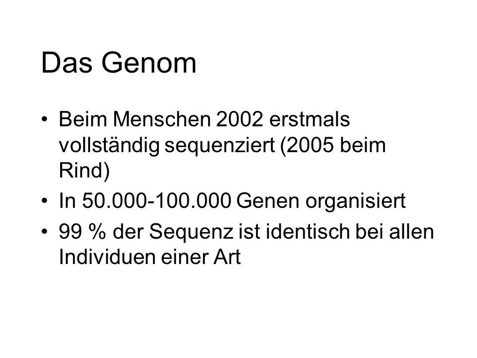Das Genom Beim Menschen 2002 erstmals vollständig sequenziert (2005 beim Rind) In 50.000-100.000 Genen organisiert.