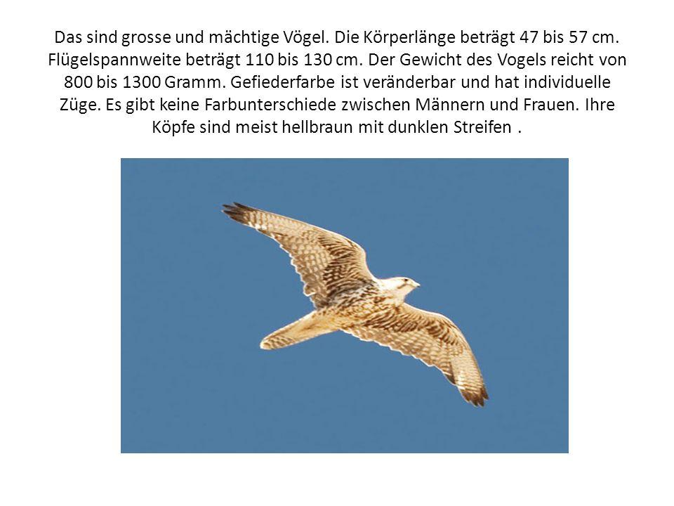 Das sind grosse und mächtige Vögel