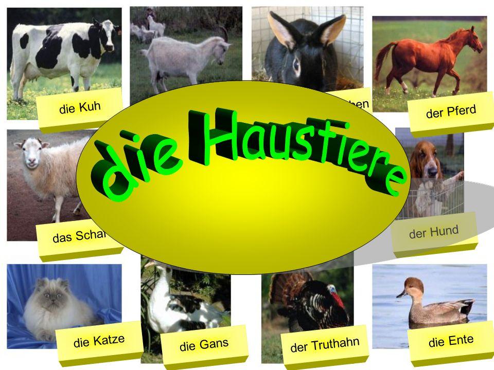 die Haustiere die Kuh das Kaninchen die Ziege der Pferd der Esel
