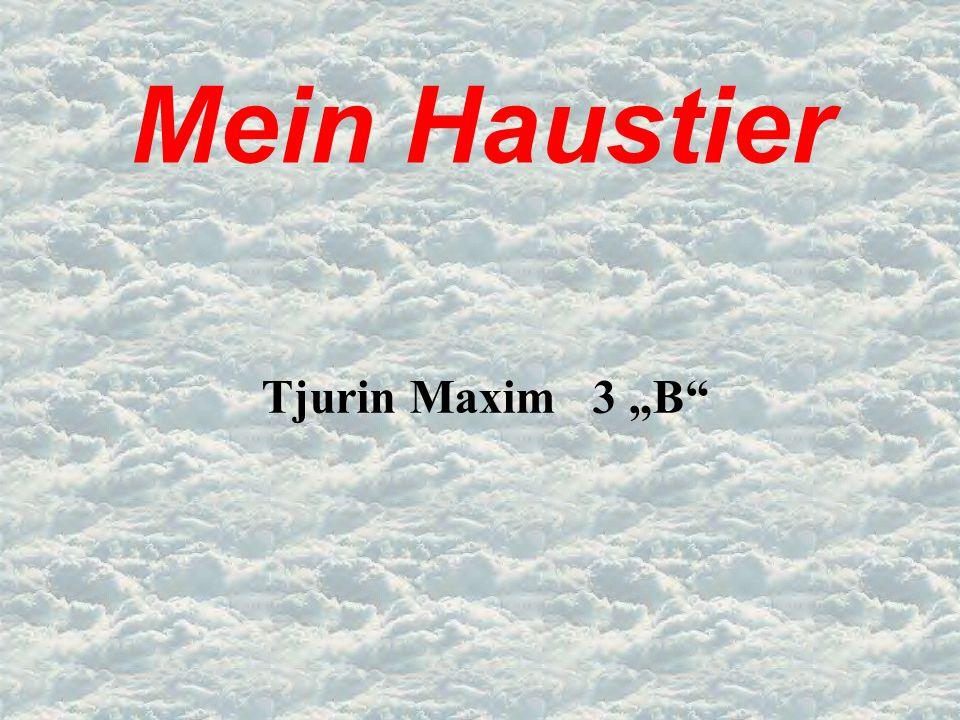 """Mein Haustier Tjurin Maxim 3 """"B"""