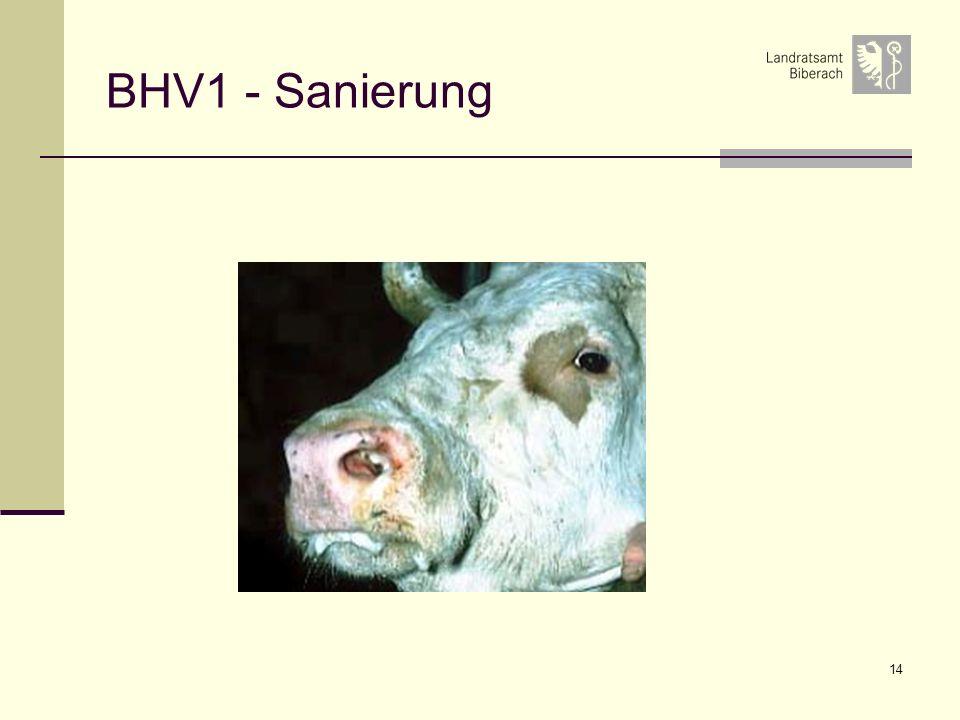 BHV1 - Sanierung