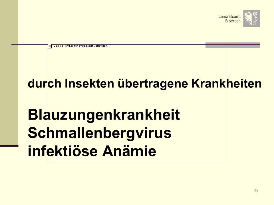 Blauzungenkrankheit Schmallenbergvirus infektiöse Anämie