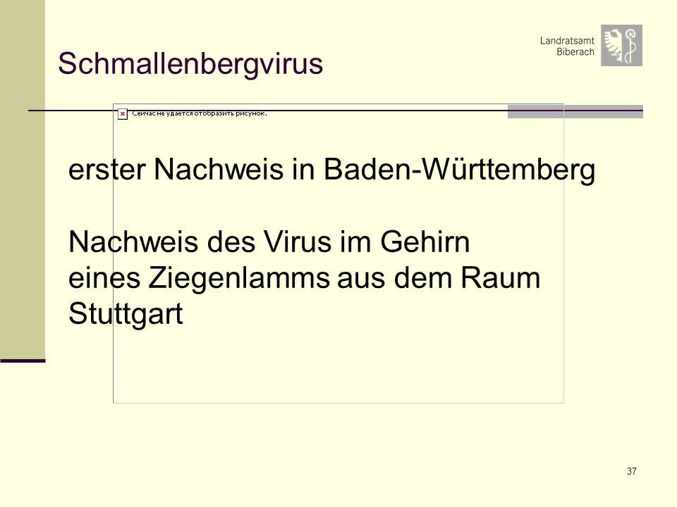 Schmallenbergvirus erster Nachweis in Baden-Württemberg. Nachweis des Virus im Gehirn. eines Ziegenlamms aus dem Raum.