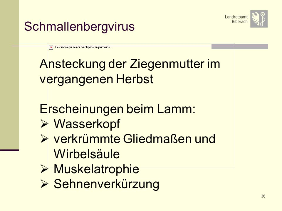 Schmallenbergvirus Ansteckung der Ziegenmutter im. vergangenen Herbst. Erscheinungen beim Lamm: Wasserkopf.