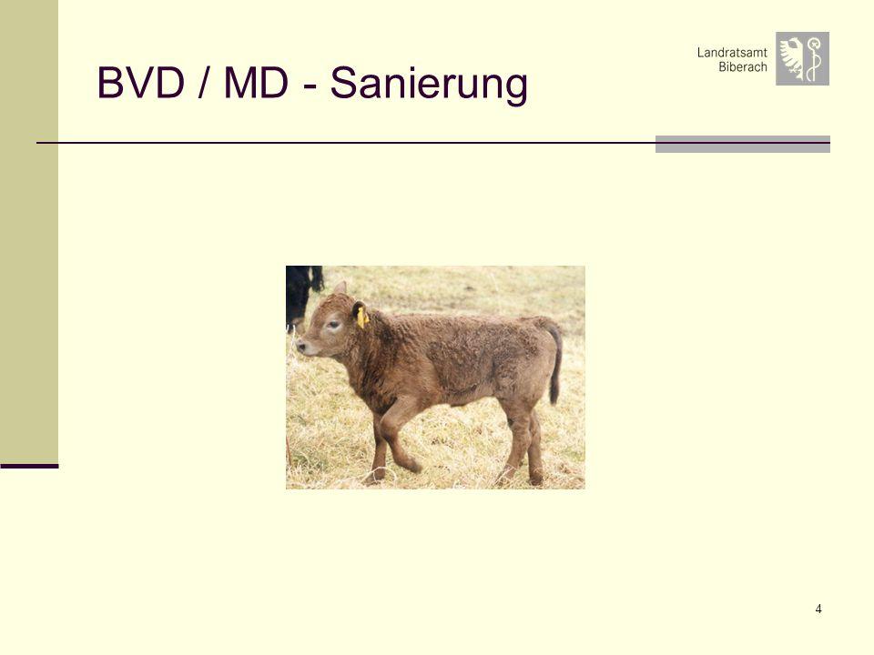 BVD / MD - Sanierung