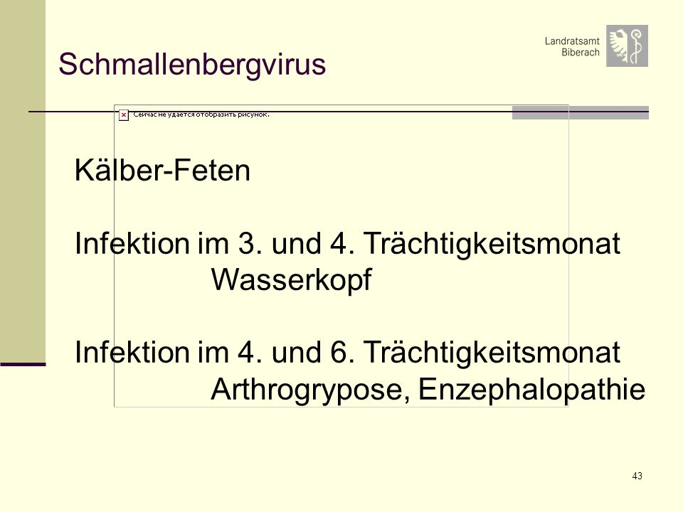 Schmallenbergvirus Kälber-Feten. Infektion im 3. und 4. Trächtigkeitsmonat. Wasserkopf. Infektion im 4. und 6. Trächtigkeitsmonat.