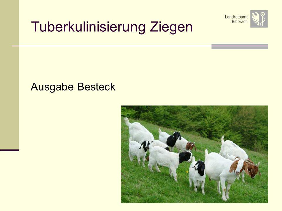 Tuberkulinisierung Ziegen