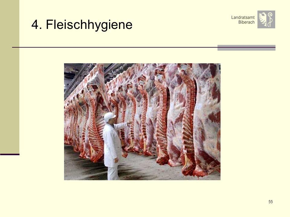 4. Fleischhygiene