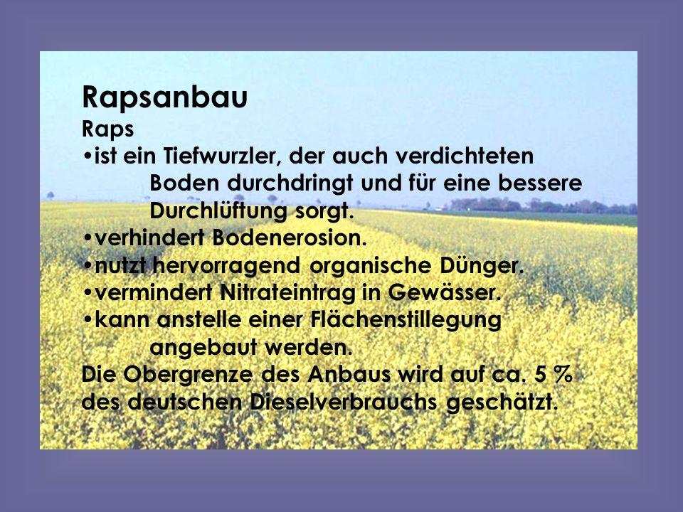 Rapsanbau Raps. ist ein Tiefwurzler, der auch verdichteten Boden durchdringt und für eine bessere Durchlüftung sorgt.
