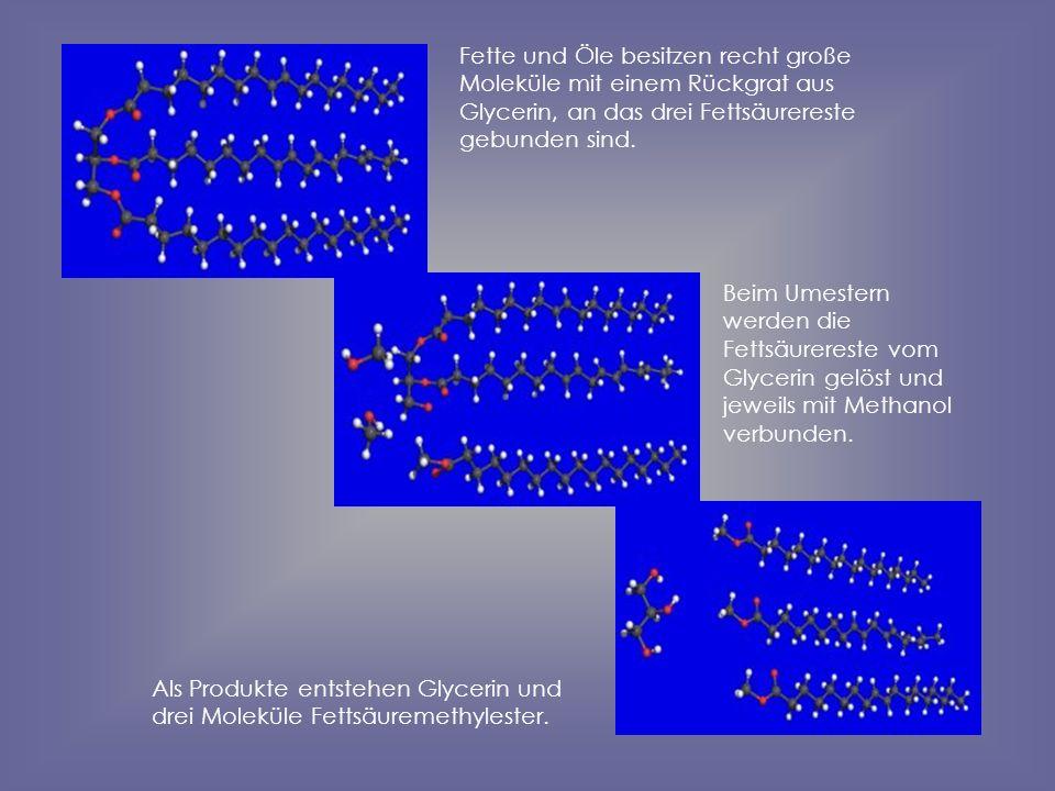 Fette und Öle besitzen recht große Moleküle mit einem Rückgrat aus Glycerin, an das drei Fettsäurereste gebunden sind.