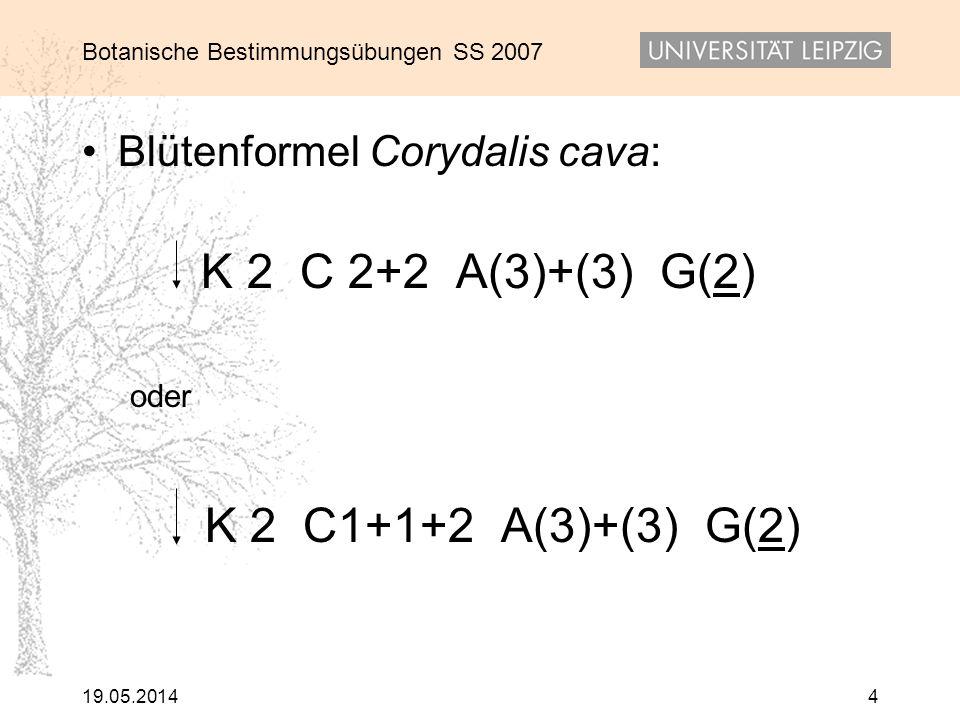 K 2 C1+1+2 A(3)+(3) G(2) Blütenformel Corydalis cava: