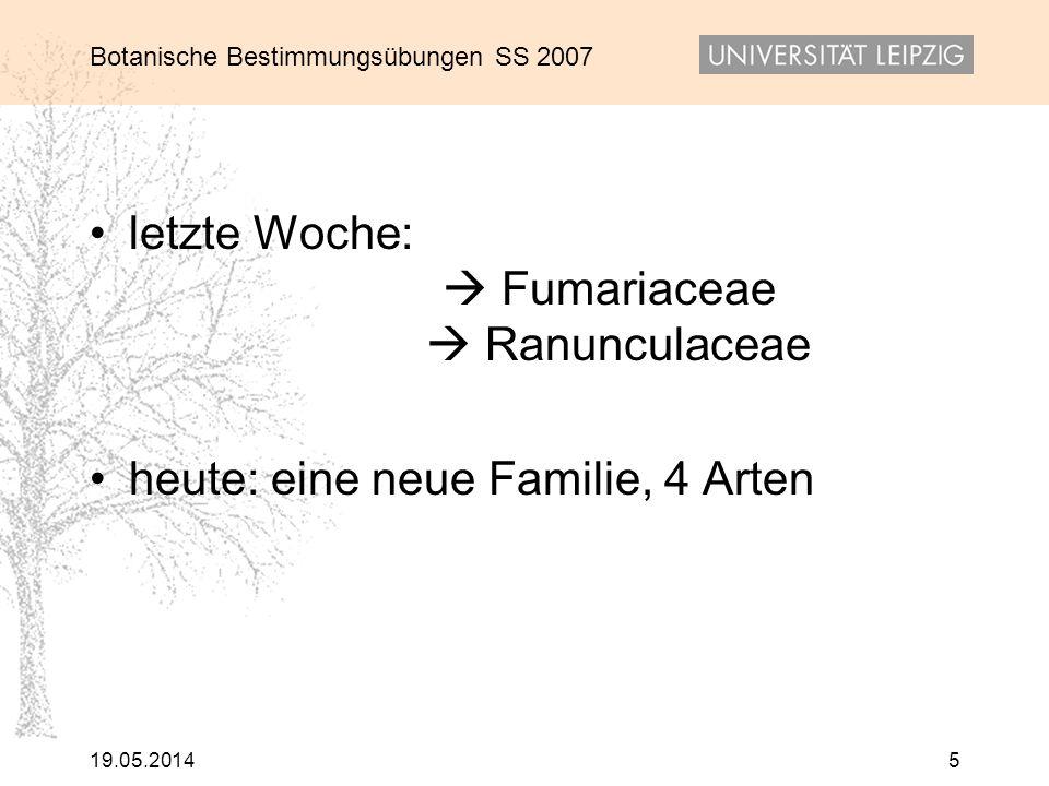 letzte Woche:  Fumariaceae  Ranunculaceae