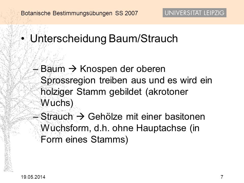 Unterscheidung Baum/Strauch