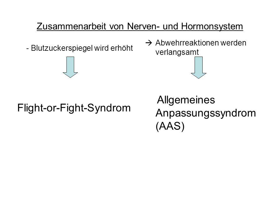 Zusammenarbeit von Nerven- und Hormonsystem