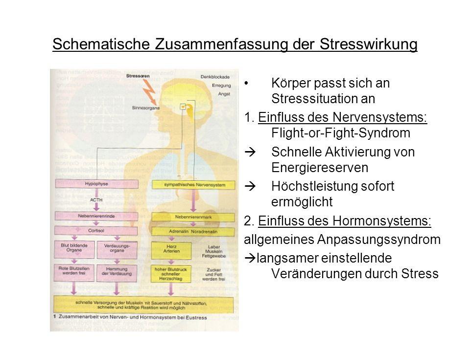 Schematische Zusammenfassung der Stresswirkung