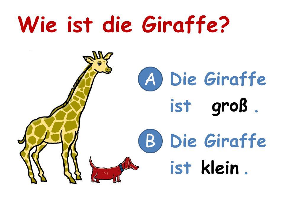 Wie ist die Giraffe A Die Giraffe ist . groß B Die Giraffe ist .