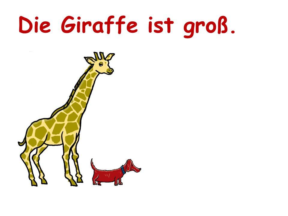 Die Giraffe ist groß.