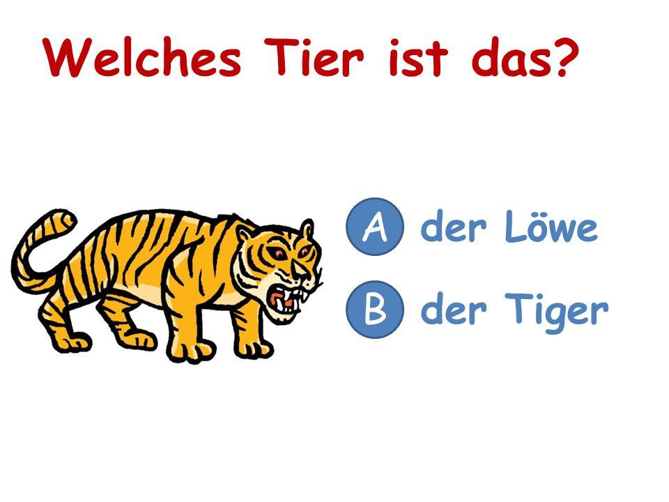 Welches Tier ist das A der Löwe B der Tiger