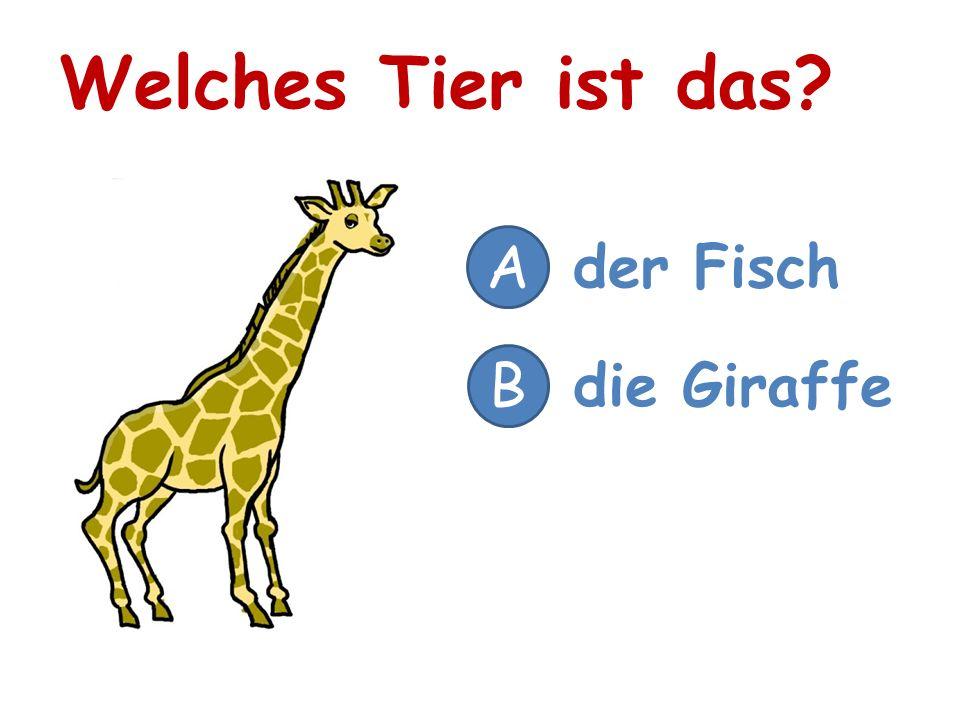 Welches Tier ist das A der Fisch B die Giraffe