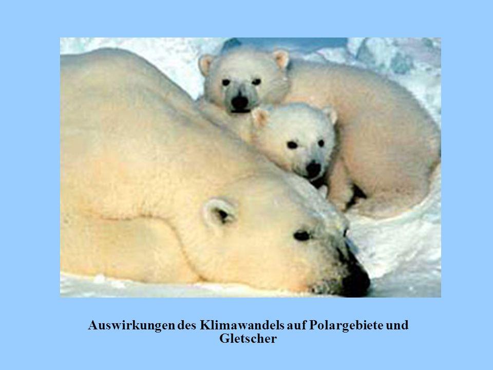Auswirkungen des Klimawandels auf Polargebiete und Gletscher